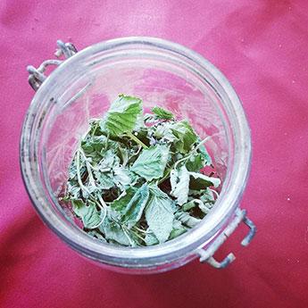 feuilles de mélisse