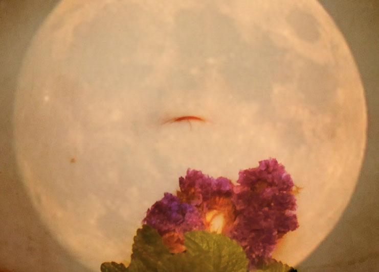 vivre avec les cycles lunaires
