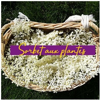 Recette d'été : Sorbet aux plantes